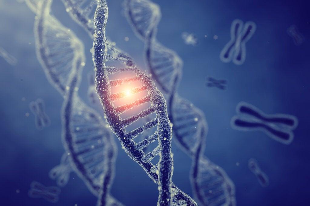Las 9 diferencias entre genotipo y fenotipo