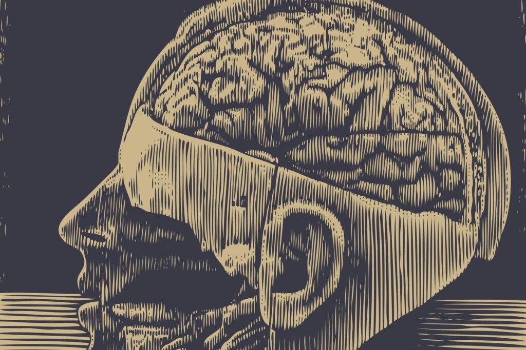 Ilustración de una cabeza con un cerebro