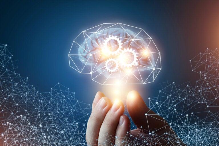 Las 4 diferencias entre inteligencia fluida e inteligencia cristalizada
