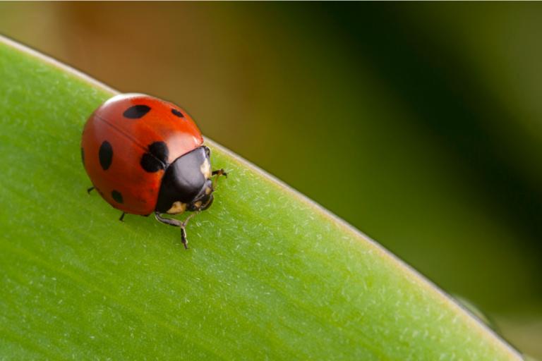 ¿Los insectos sienten dolor?