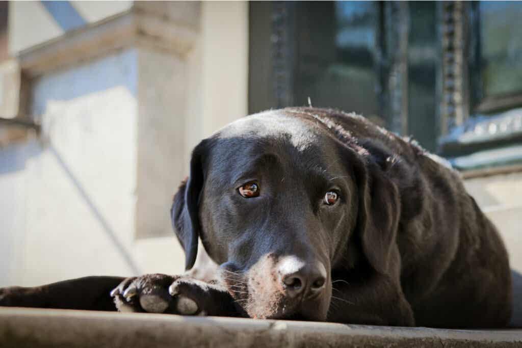 Perro triste y deprimido
