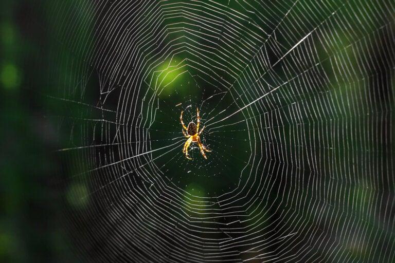 ¿Qué significa soñar con arañas?