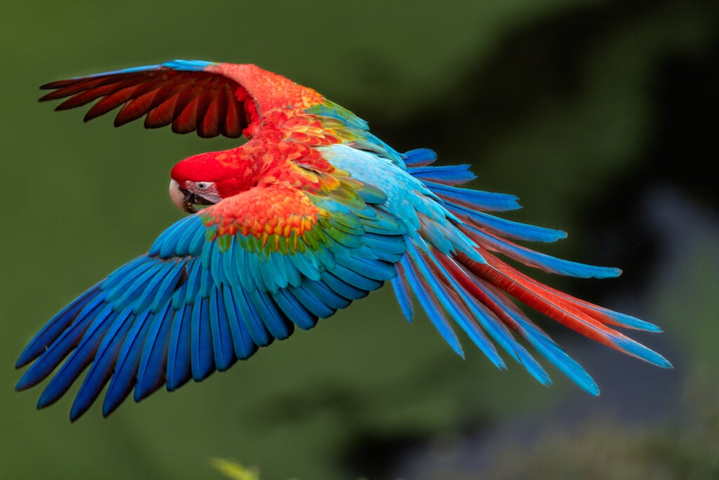 Macaw, one of the most beautiful animals in the world.