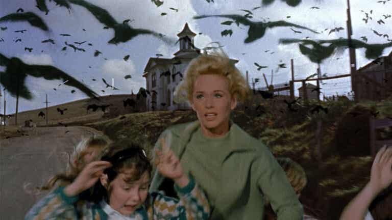 Los pájaros: desencadenando la ornitofobia