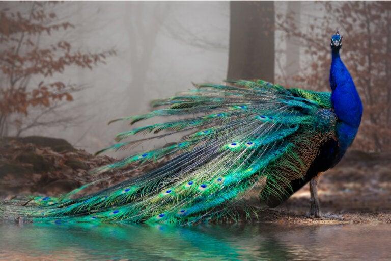 Los 11 animales más bonitos del mundo