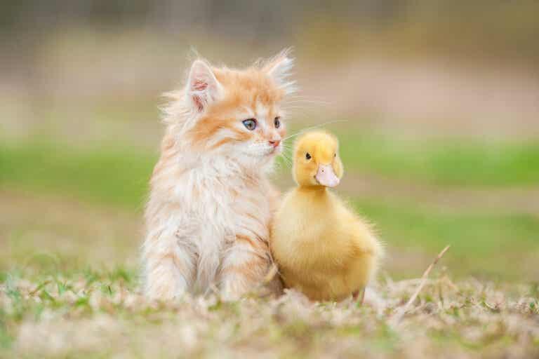 La amistad entre animales