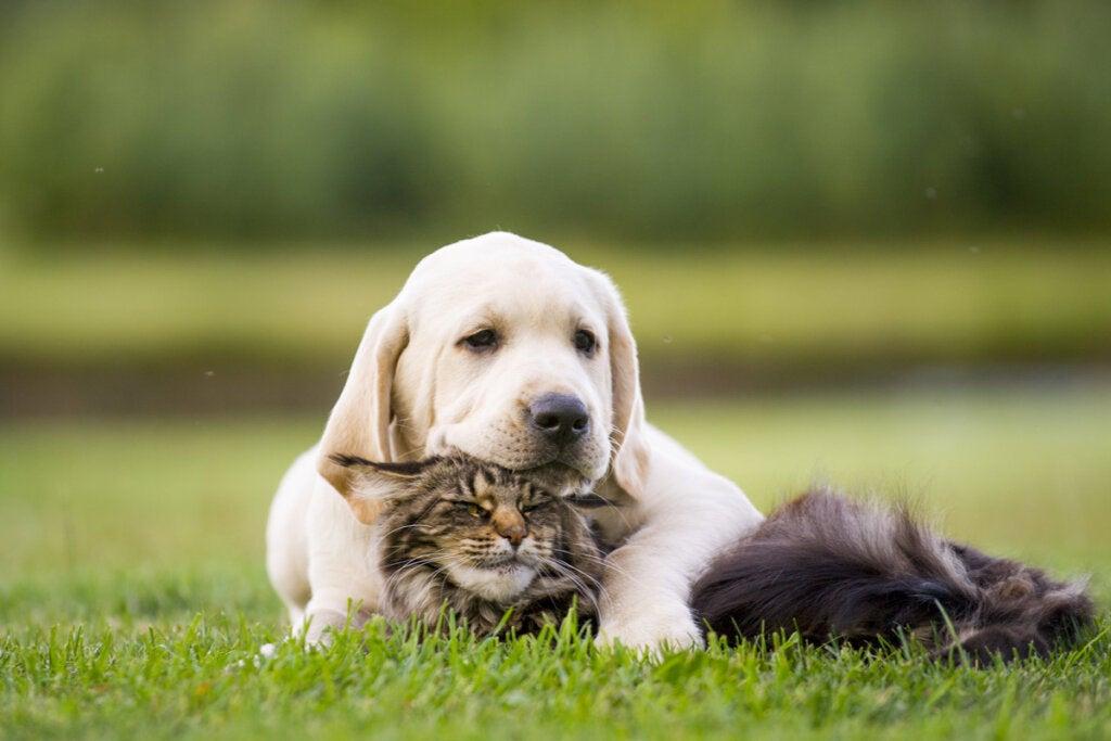 tierische Freundschaft zwischen Hund und Katze