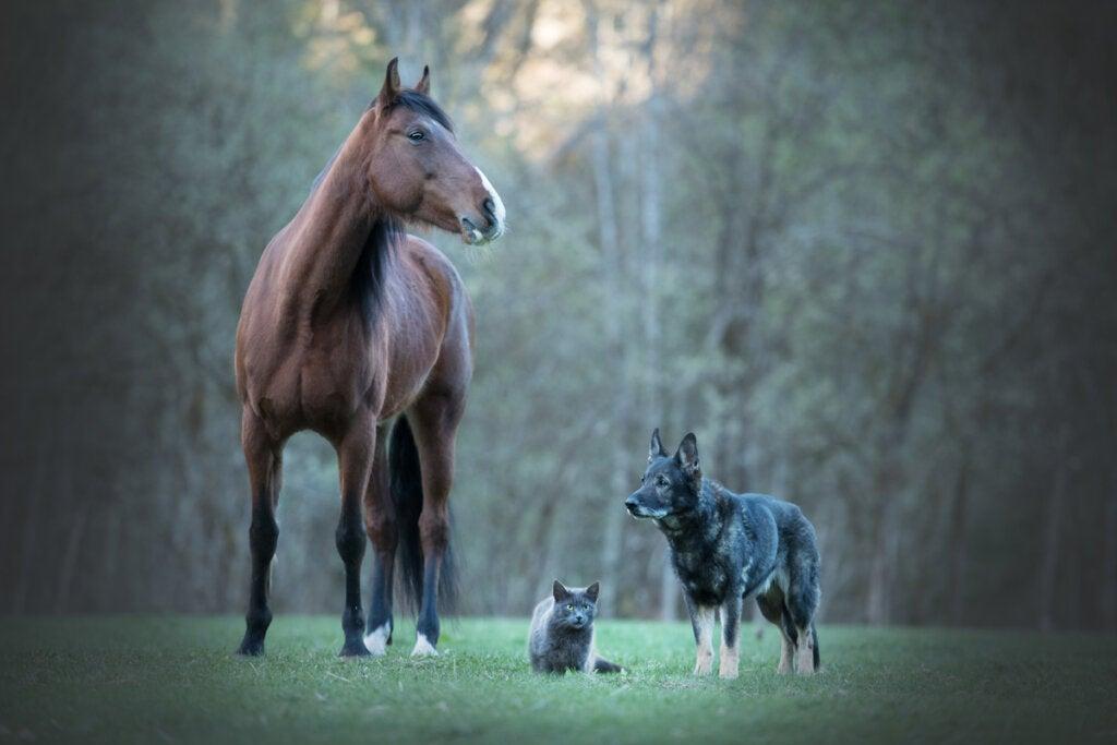 Tierische Freundschaft