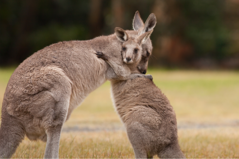 ¿Los animales se abrazan?