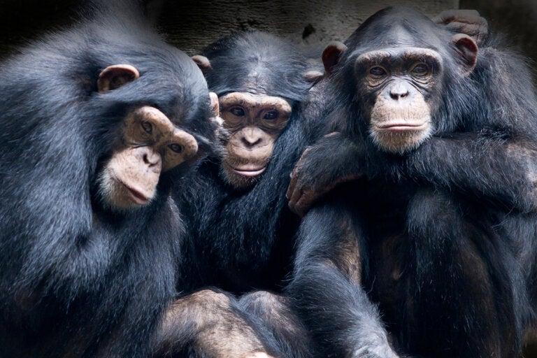 Los 4 animales con más empatía