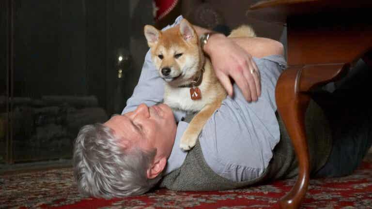 Las 11 mejores películas sobre perros
