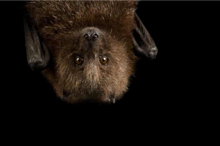 9 curiosidades sobre los murciélagos