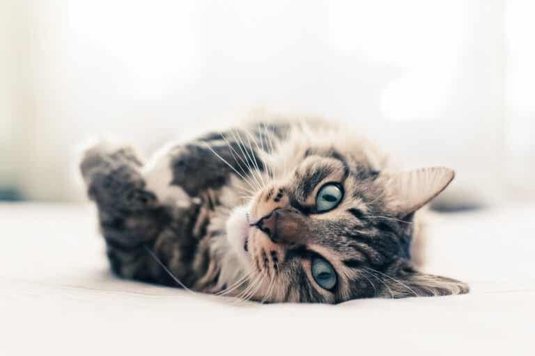 10 curiosidades sobre los gatos